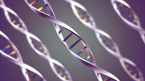 Genetik och evolution