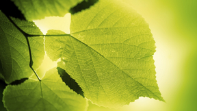 Ekologi och kretslopp